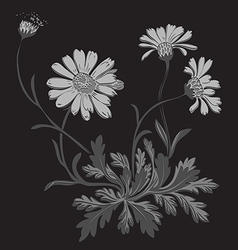 Hand drawn Dandelion flowers isolated on black vector image vector image
