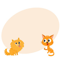 Pomeranian spitz dog and red cat kitten vector