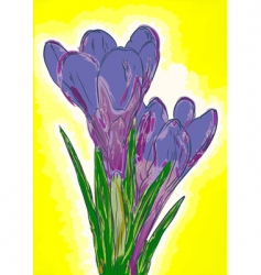 crocuses vector image