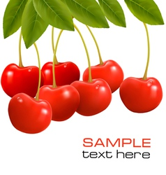 juicy ripe cherries vector image