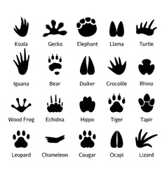 Animal and reptile footprints vector