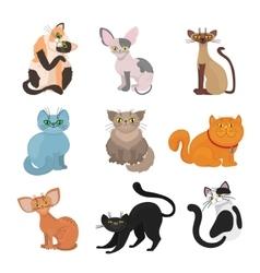 Cartoon domestic cats vector image