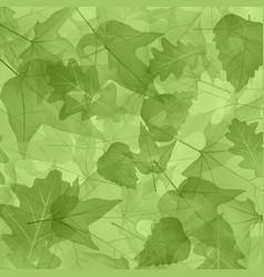 Foliage plants leaves background maple maple leaf vector