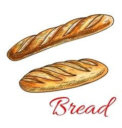 Bread sketch with french baguette and long loaf vector