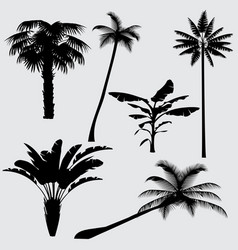 tropical palm tree silhouettes isolated on vector image