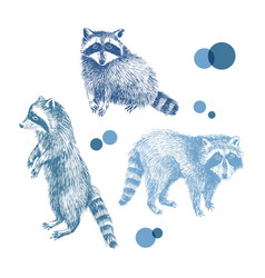 3 hand drawn raccoons vector