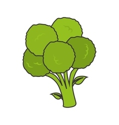 broccoli vegetable food vector image
