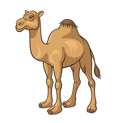 Camel vector