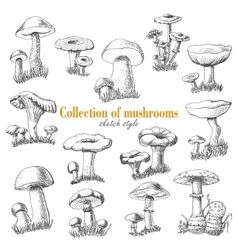 Collection of mushrooms in sketch style vector image vector image