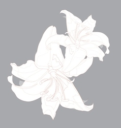 Lily design vector