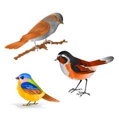 Singing smalls birds black redstart titmouse vector