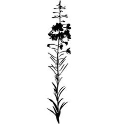 Willow herb vector