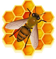 Bee with honeycomb vector