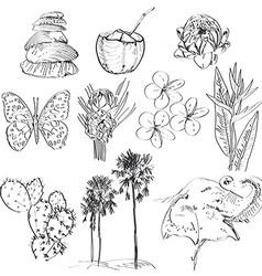 Set of doodle sketch Strelitzia plumeria lotus vector image vector image