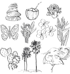 Set of doodle sketch strelitzia plumeria lotus vector