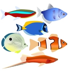 Aquarium fish-1 vector image vector image