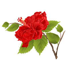 Stem red hibiscus tropical flower vector