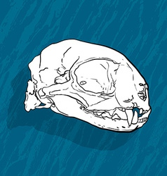 Animal skull with shadow on blue background vector image vector image