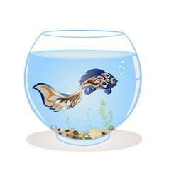 Blue fish swims in the aquarium on a white vector