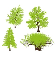 drawing of the tree llustration vector image