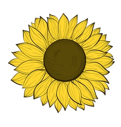 sunflower isolated on a white background vector image vector image
