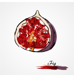 Fig fruit vector image vector image