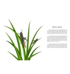 Grasshopper sitting on green grass vector