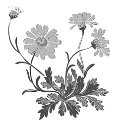 Hand drawn dandelion flowers isolated on white vector