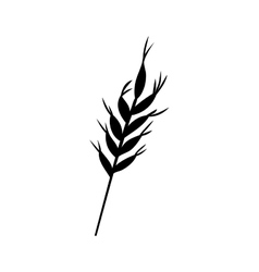 Isolated wheat ear design vector image vector image