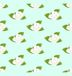 White arabian jasmine on green mint background vector