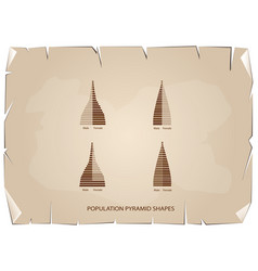 the 4 types of population pyramids graphs vector image