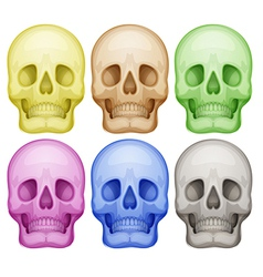 Colorful skulls vector