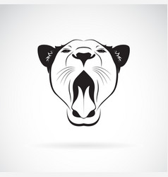 female lion open mouth on white background wild vector image