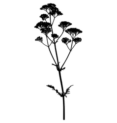 Valerian flower vector