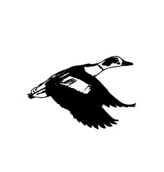 Duck-Flying-380x400 vector image