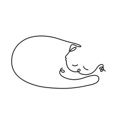 a sleeping cat drawing vector image