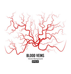 Human blood veins red blood vessels design vector