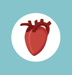 Heart cardology health image vector
