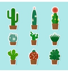 Cactus icons vector
