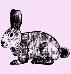 Cottontail rabbit vector