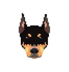 doberman head in pixel art style vector image