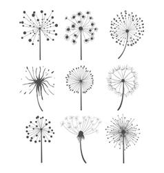 Monochrome Dandelion Set vector image vector image