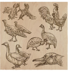 Farm animals birds - an hand drawn pack collection vector