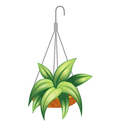 A hanging pot with a green plant vector image
