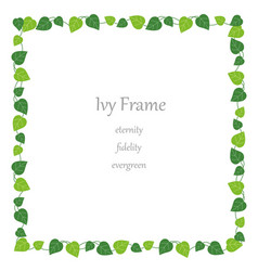 Square ivy frame vector