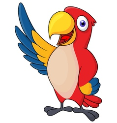 Macaw bid carton waving vector image