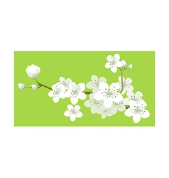 A view of flowers vector