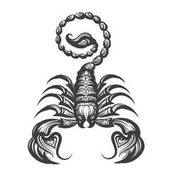 scorpion engraving vector image