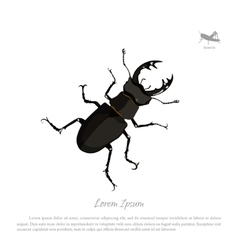 Detailed drawing of beetle deer vector