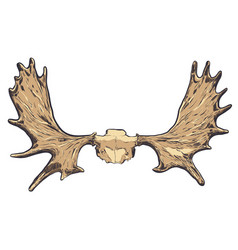 hand drawn deer horns eps vector image